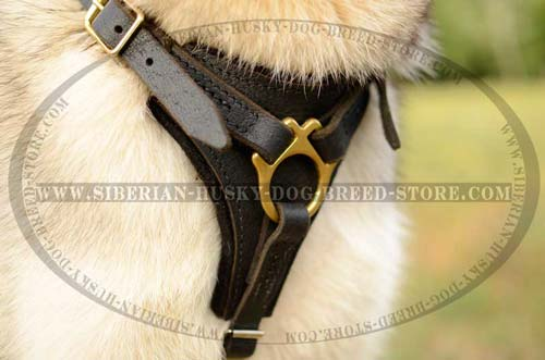 Husky leather dog harness with Y-shaped chest plate