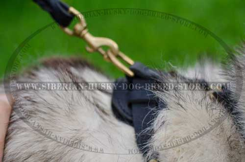Leather Husky harness with D-ring on back plate