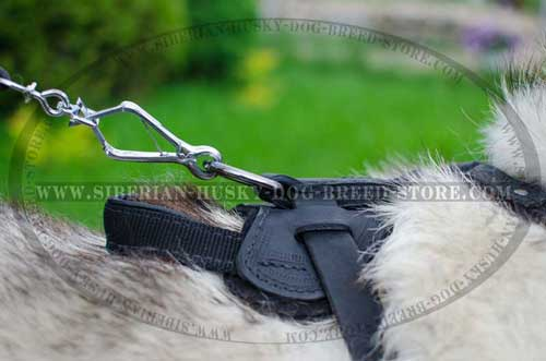 Leather dog harness for Husky with durable handle