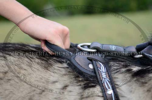 Leather dog harness with handle