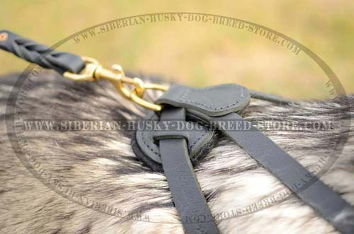 Leather dog harness with soft padding