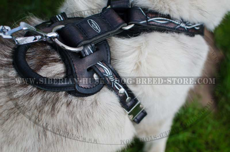 Nickel Plated Steel Fittings Of Leather Siberian Husky Harness Big on Real Leather Dog Harness