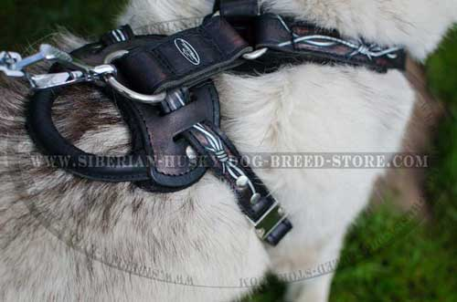 Nickel plated steel fittings of leather Siberian Husky harness
