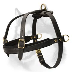 Padded front strap leather harness for Husky