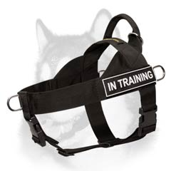 Pulling nylon harness for Siberian Husky