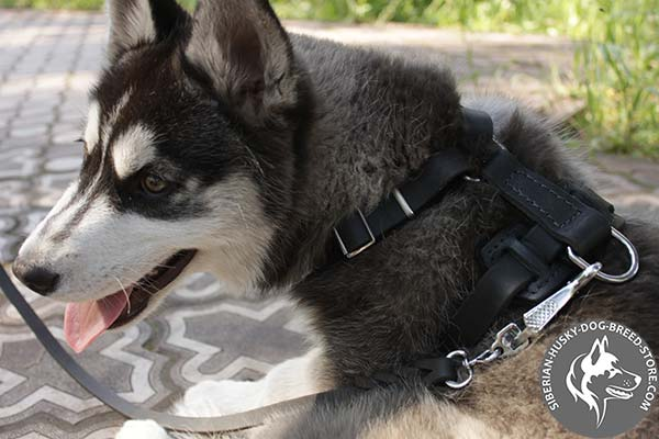 2 ways adjustable dog harness