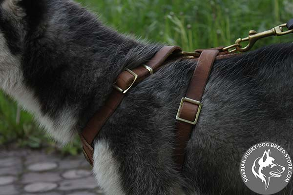 Siberian Husky adjustable harness