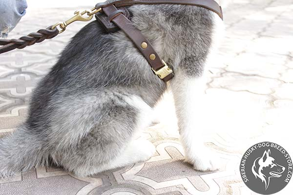 Siberian Husky pure leather harness with adjustable straps