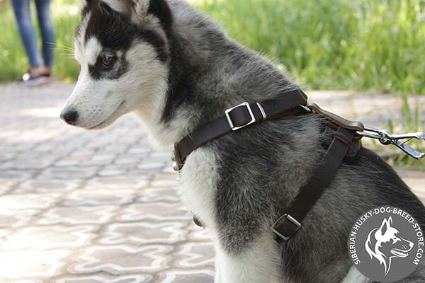 Easy to adjust Siberian Husky strong leather harness