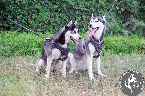 Free breathing Siberian Husky harness with decorations