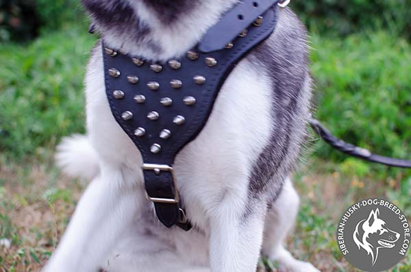 Siberian Husky harness with spiked padded chest plate