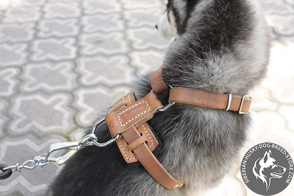 Siberian Husky harness with nickel-plated hardware