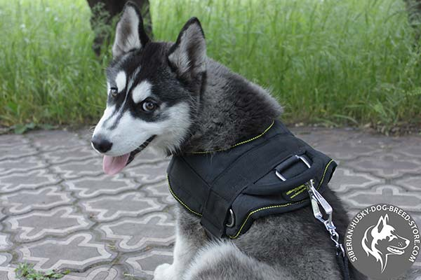 Siberian Husky strong nylon harness with D-ring