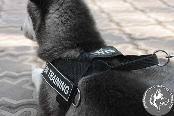 Siberian Husky harness with side D-ring