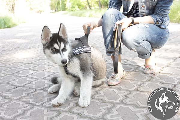 Siberian Husky harness with under belly strap