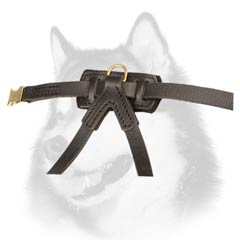Siberian Husky dog harness with D-ring