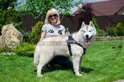 Training nylon Siberian Husky harness pulling