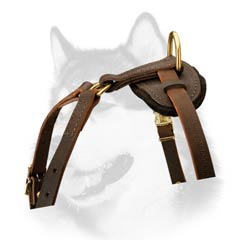 Siberian Husky leather dog harness with padded back plate