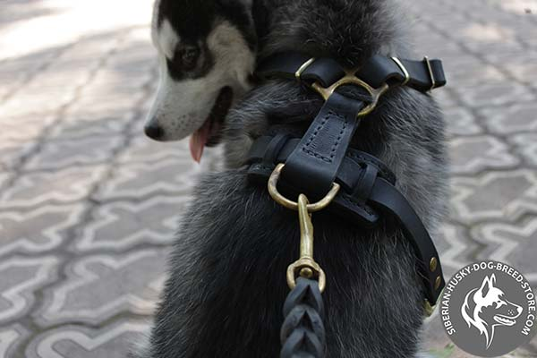 Siberian Husky leather harness of classic design with d-ring for leash attachment for improved control