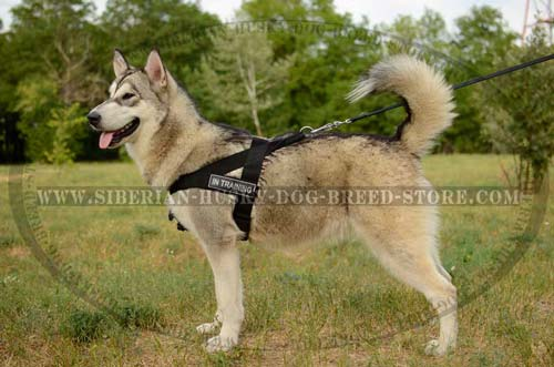 Lightweight nylon dog harness