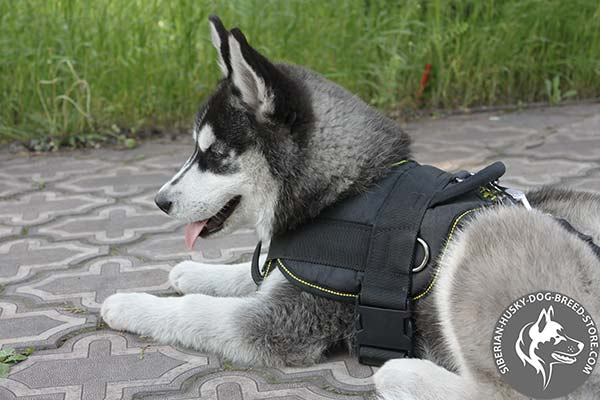 Siberian Husky nylon harness of lightweight material with d-ring for leash attachment for better comfort