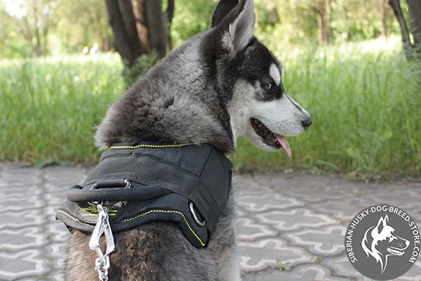 Siberian Husky nylon harness with reliable nickel plated hardware for pulling activity
