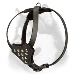 Comfy leather Siberian Husky puppy harness