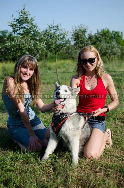 Easy-to-use Siberian Husky harness