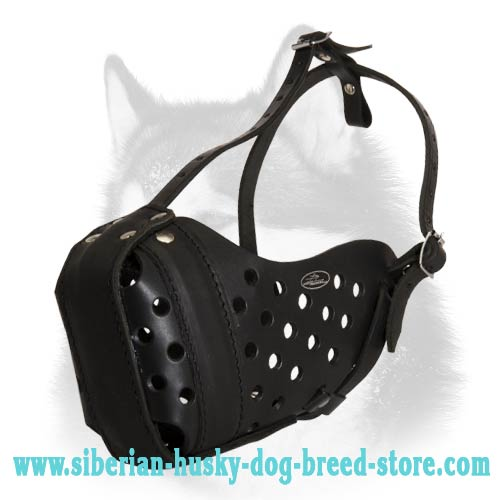 Agitation Leather Siberian Husky Muzzle