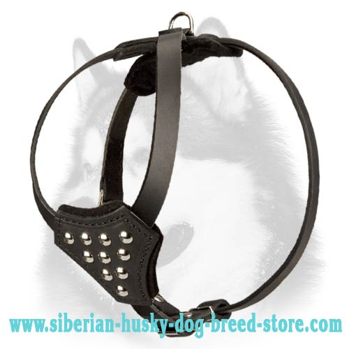 Studded Leather Siberian Husky Puppy Harness for Walking