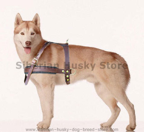 dog harness for siberian husky