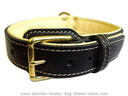 Royal Nappa Padded Hand Made Leather Dog Collar for  Siberian Husky