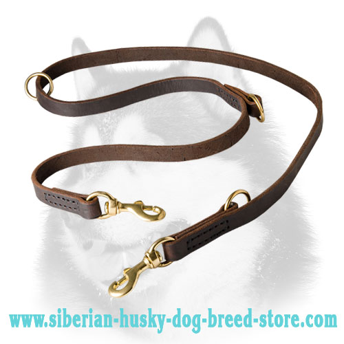 Multimode dog lead for Siberian Husky