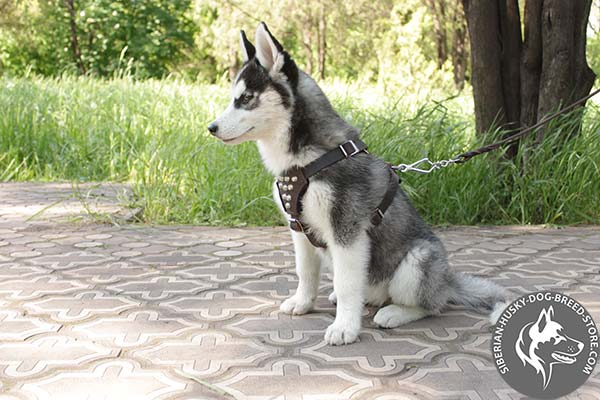Siberian Husky leather leash with rust-proof nickel plated hardware for professional use