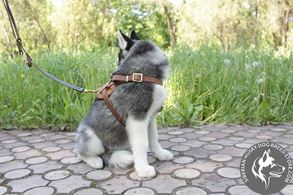 Siberian Husky leather leash with non-corrosive brass plated hardware for basic training