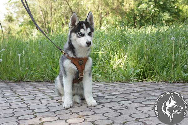 Siberian Husky leather leash of genuine materials with brass plated hardware for daily walks