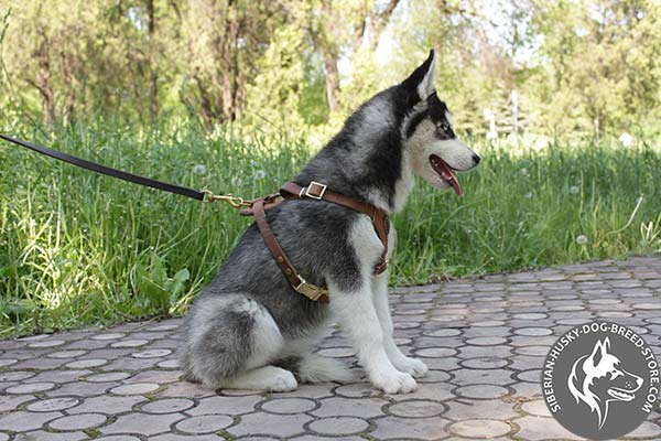 Siberian Husky leather leash with rust-proof brass plated hardware for any activity