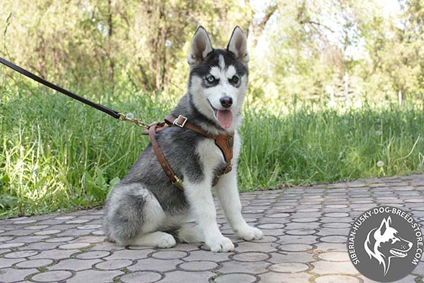 Siberian Husky leather leash with corrosion resistant brass plated hardware for walking