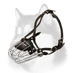 Husky wire dog muzzle