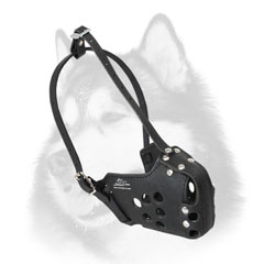 Absolute reliability leather dog muzzle for Siberian Husky