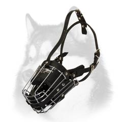 Husky strong cage-like muzzle