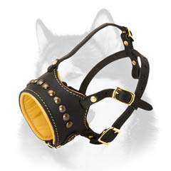 One row studs decoration Husky muzzle