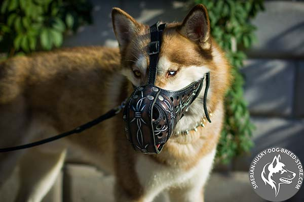 Siberian Husky leather muzzle of high quality with nickel plated hardware for improved control