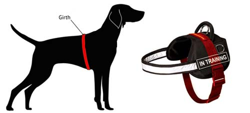 how to measure harness instruction