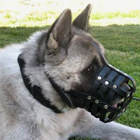 Siberian Husky Elegant Leather Dog Muzzle