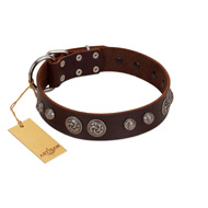 """Choco Brownie"" FDT Artisan Brown Leather Siberian Husky Collar Adorned with Silver-Like Conchos"