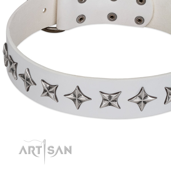 Comfy wearing adorned dog collar of strong leather