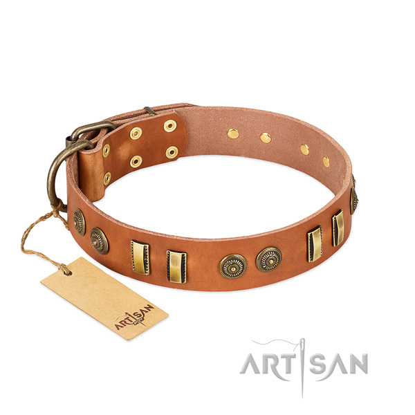 Corrosion proof embellishments on leather dog collar for your four-legged friend