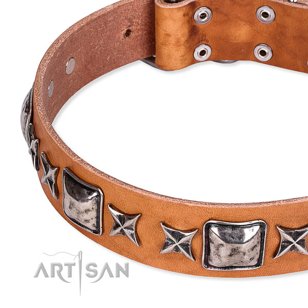 Comfy wearing embellished dog collar of top notch full grain natural leather