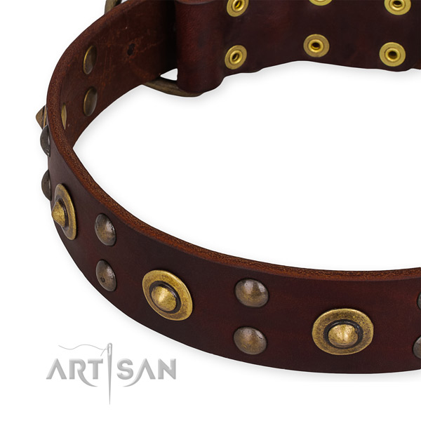 Genuine leather collar with strong fittings for your stylish pet